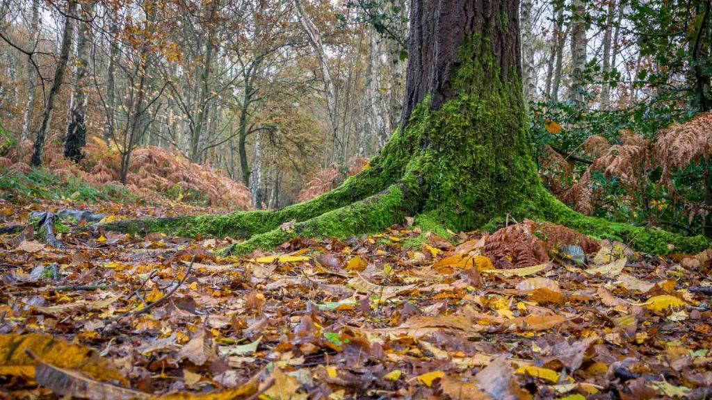 Link to woodland portfolio
